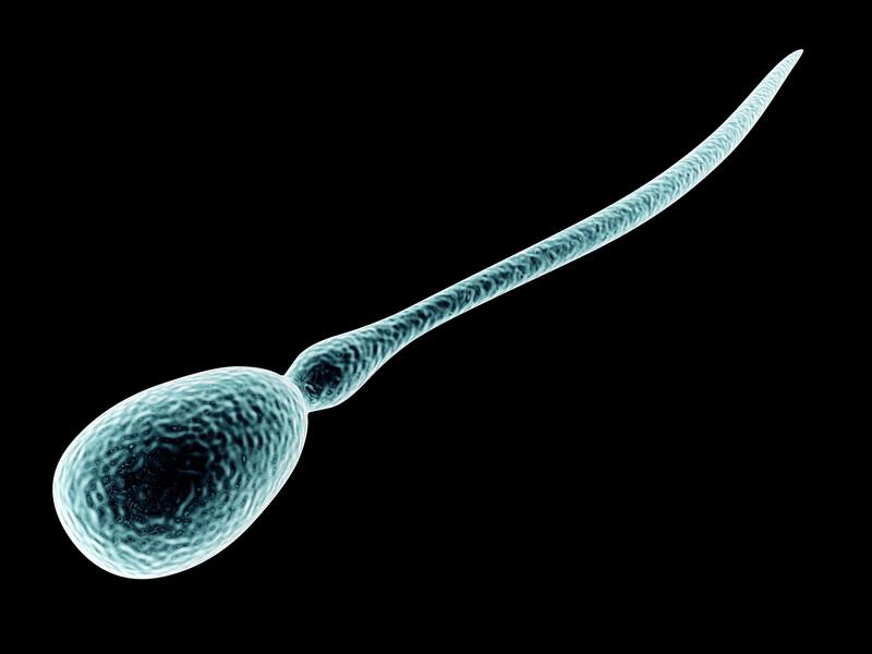 hur mycket spermier producerar man