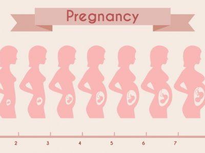 Följ hur din bebis växer inne i din mage och bebis uttveckling